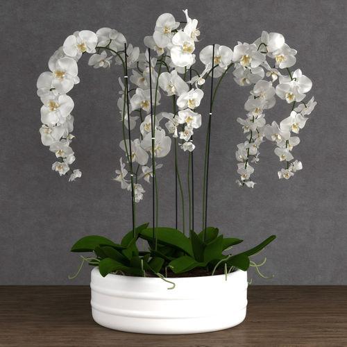 orchid 6 3d model max obj mtl 1