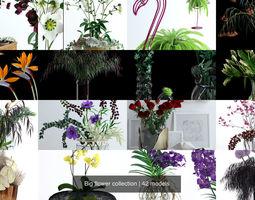 Big flower collection 3D model
