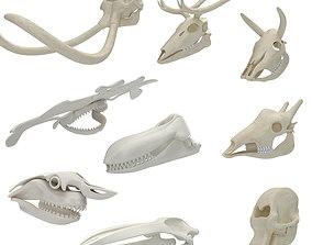 3D Animal Skulls 9 in 1