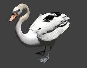3D Mute swan