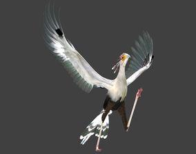 Secretarybird 3D model