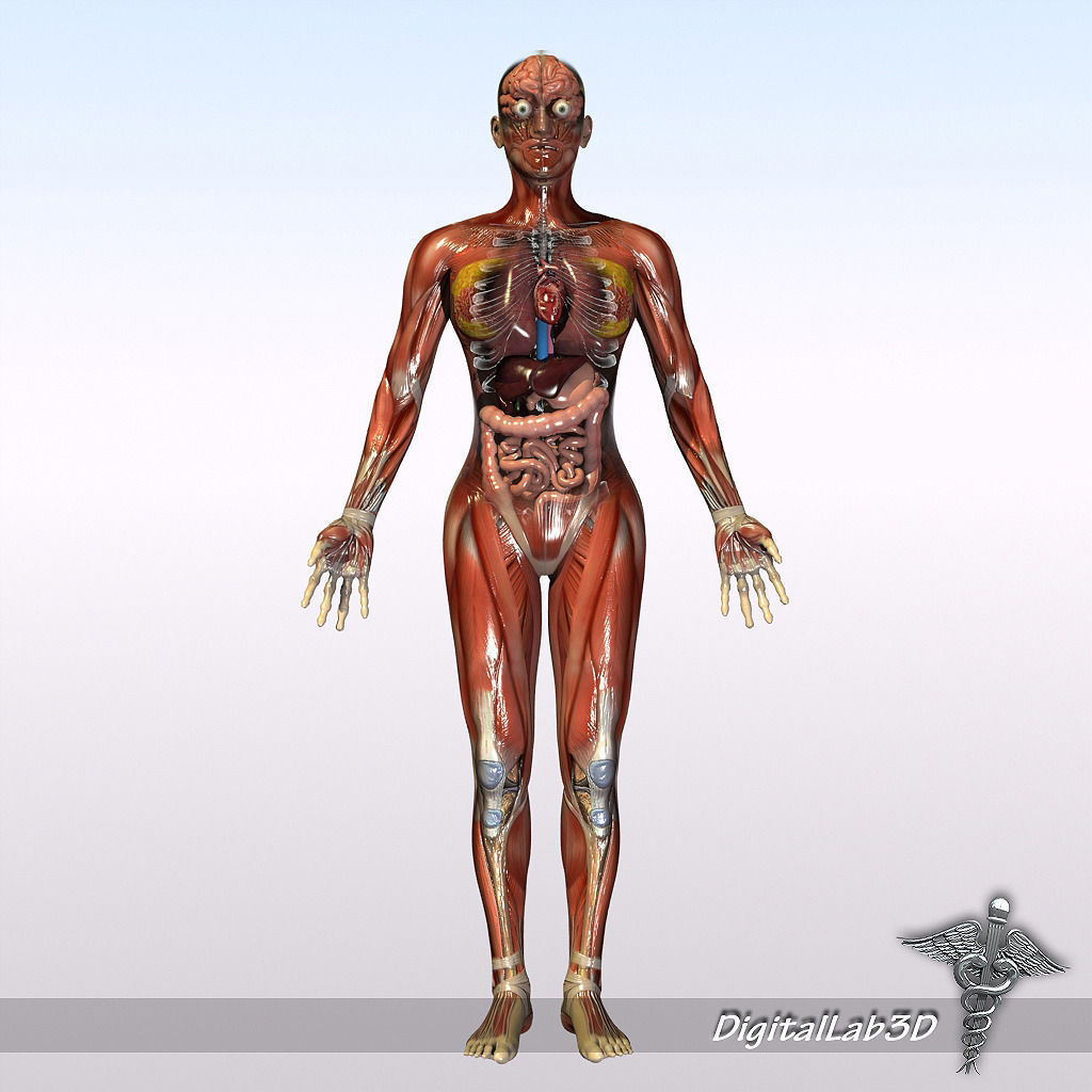 3d Female Body Anatomy Diagram Block And Schematic Diagrams