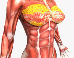 rigged - human female muscular system 3d model ma mb