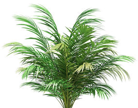 Golden Cane Palm Tree 3D Model 2m
