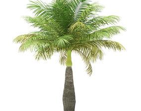 Bottle Palm Tree 3D Model 4m
