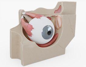 3D asset game-ready Human Eye Anatomy