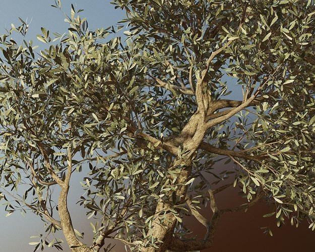 set of 6 olive trees 3d model obj mtl fbx ma mb 1