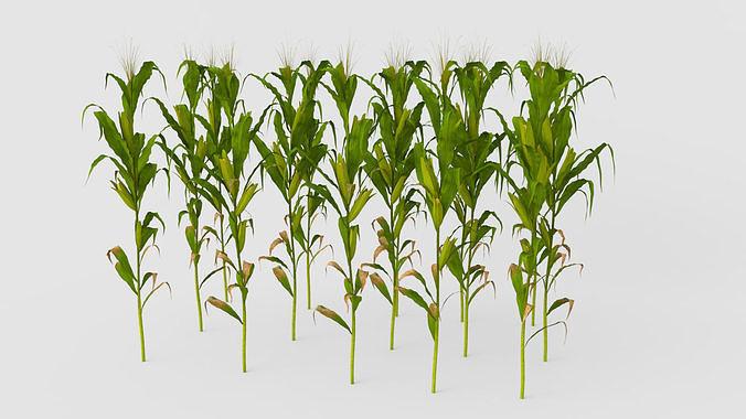 cornfield 3d model max obj mtl ma mb blend 1