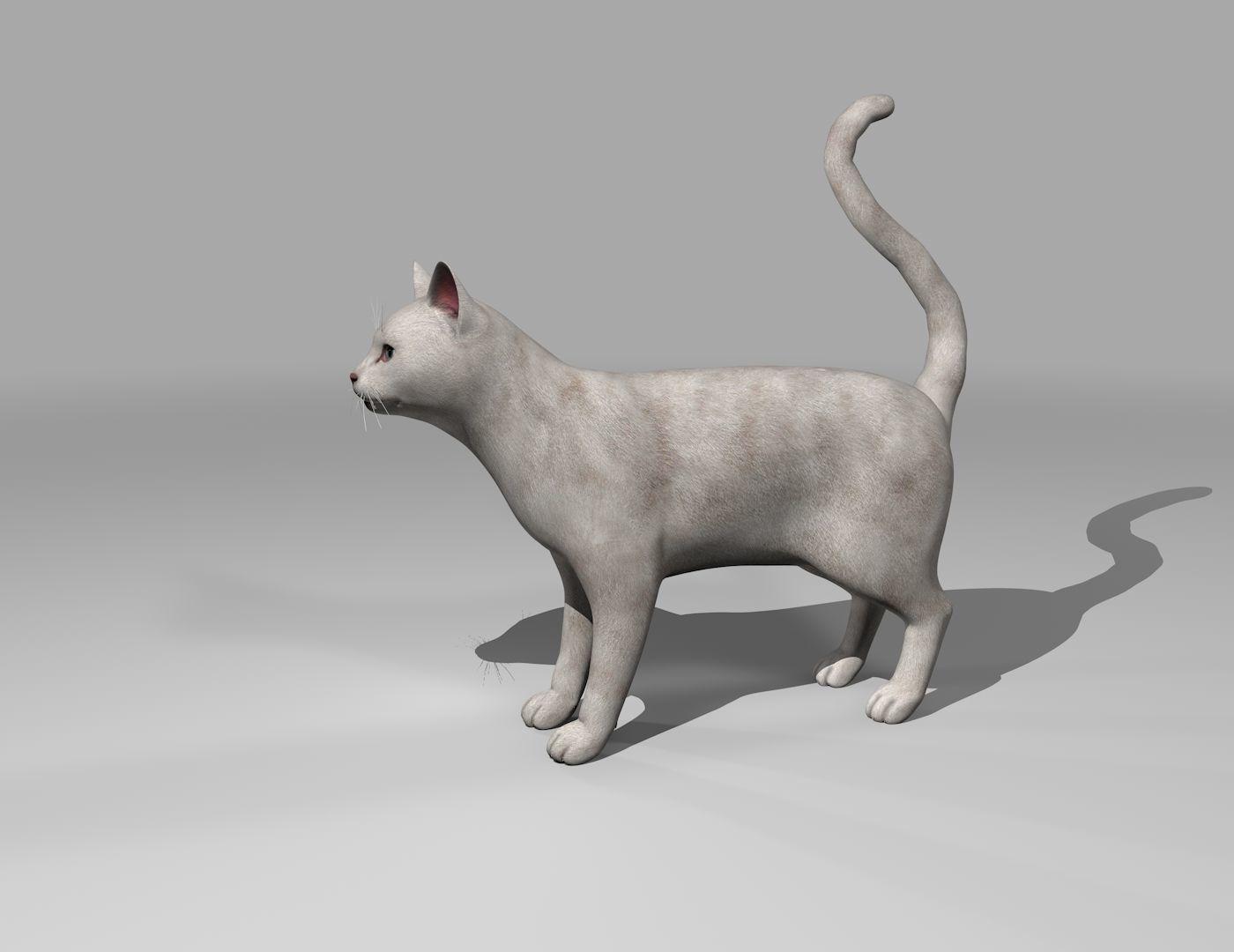 White Cat Rigged