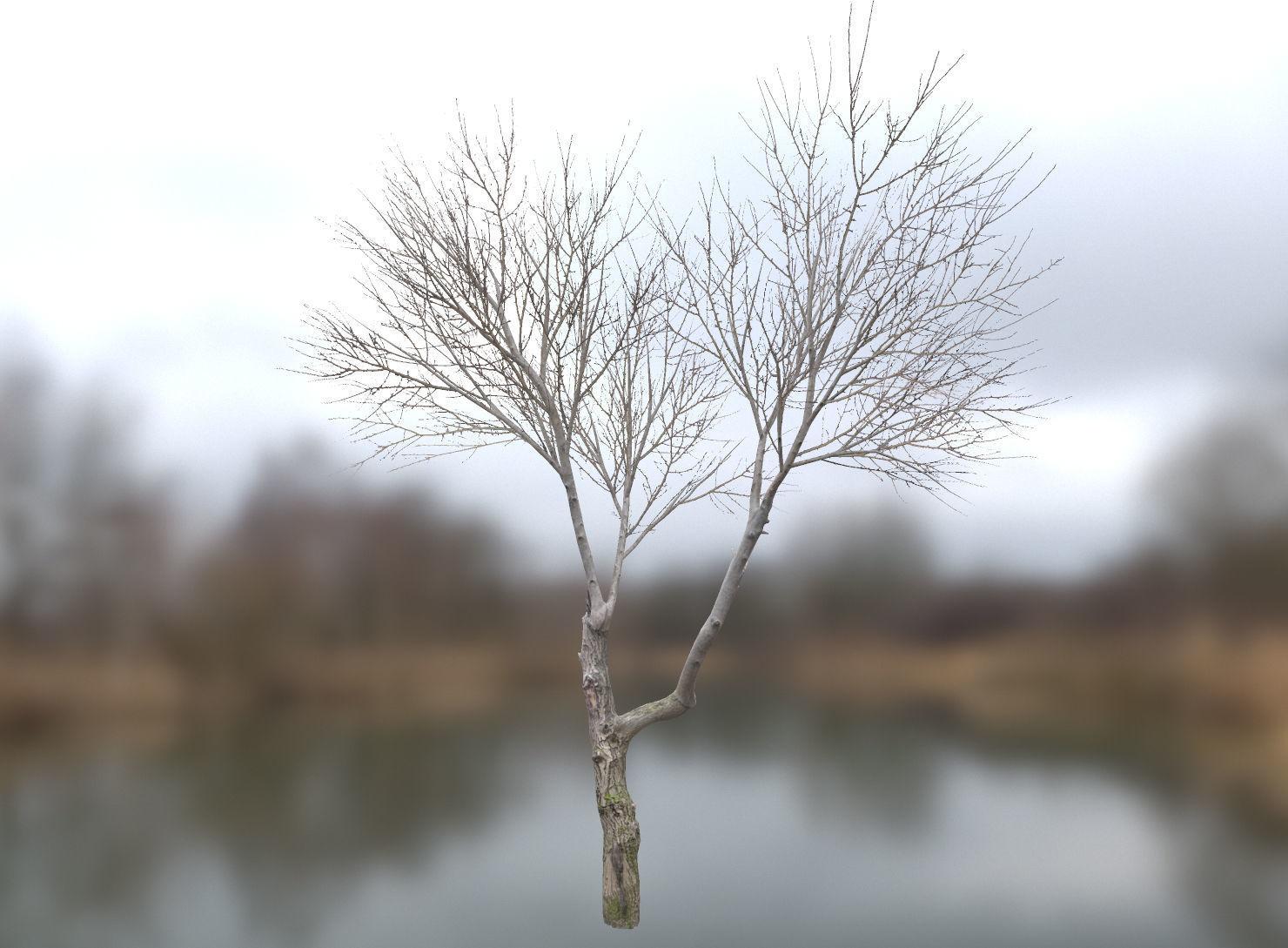 Autumn Dry Tree Scan 2 Full-Size | 3D model