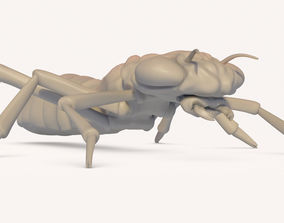Insect 3D printable model
