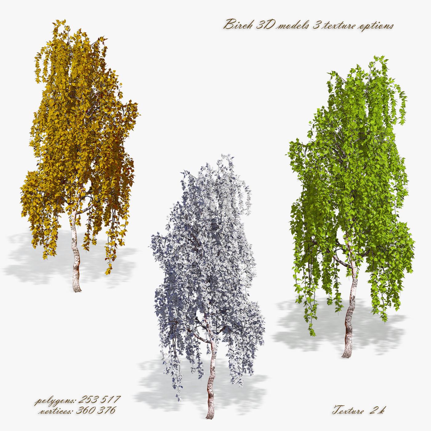 Birch Tree 02