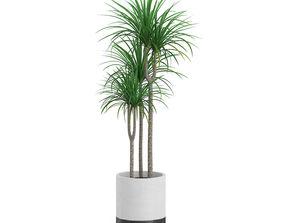 Plant Tree 12 3D asset