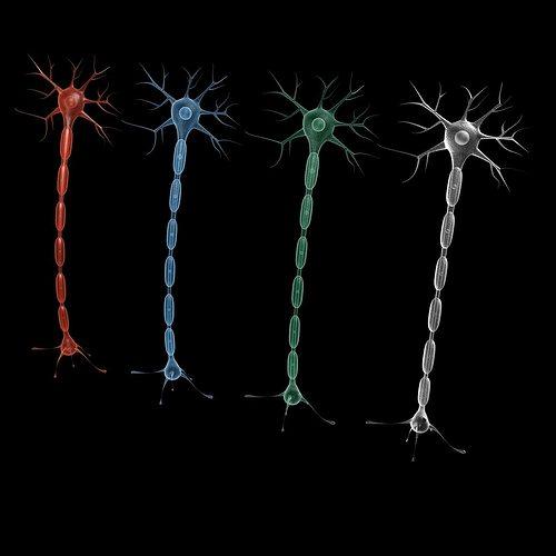 neuron 4 3d model max obj mtl 3ds fbx tga 1
