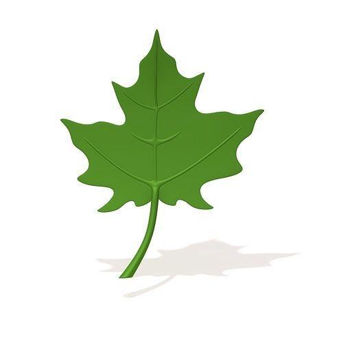 maple leaf cartoon 3d model max obj mtl fbx ma mb 1