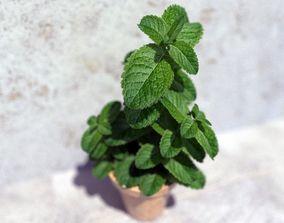 3D Mint in a pot