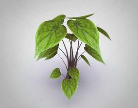 Alocasia Cucullata 3D model