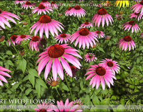 3D model realtime Low Polygon Wild Flowers - Echinacea