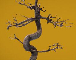 bonsai 3d