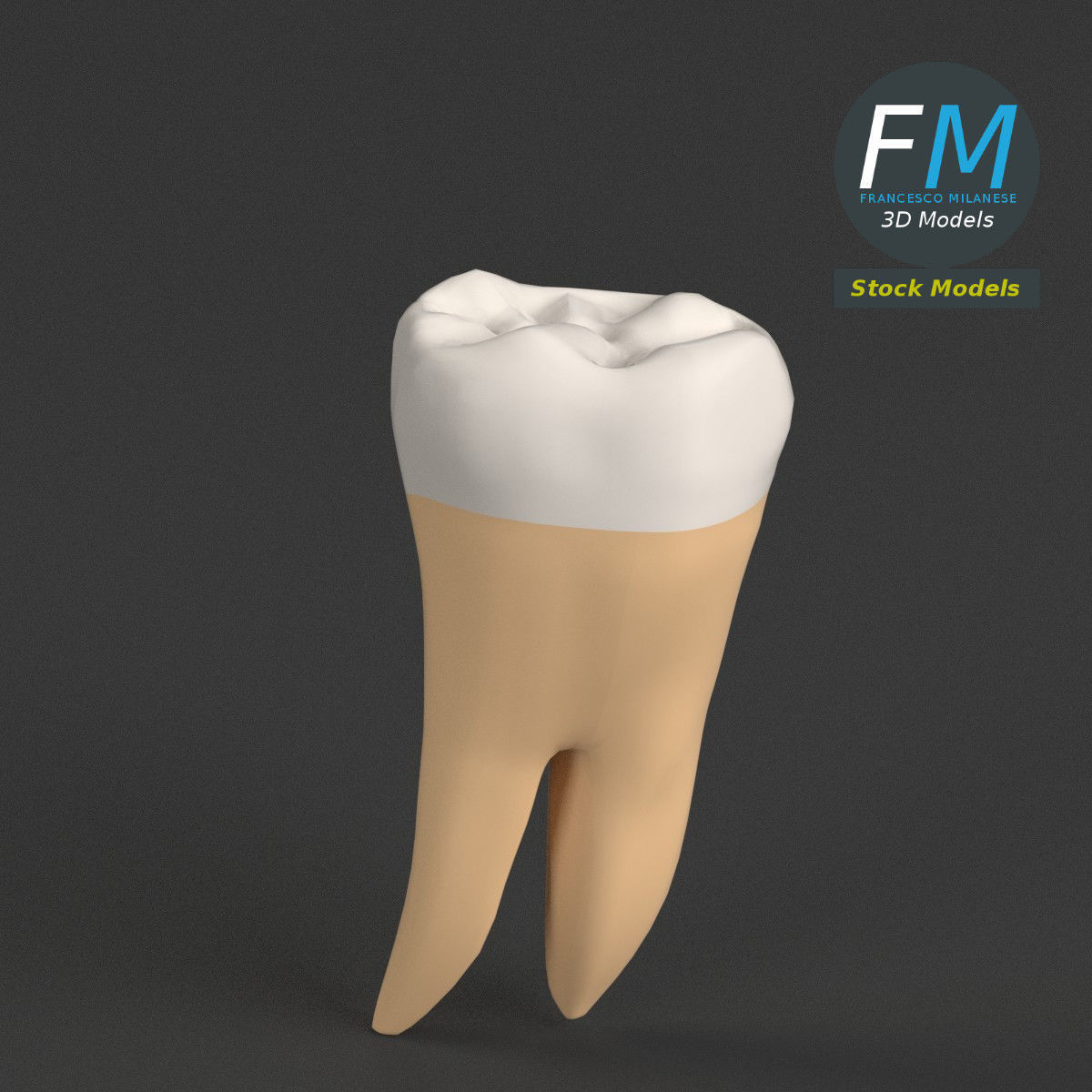 Stylized human first molar tooth