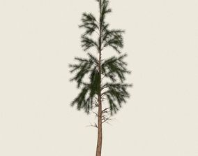 3D asset Game Ready Conifer Tree 11
