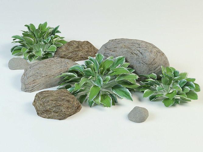 hosta set plantain lily 3d model max obj mtl 3ds fbx 1