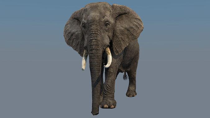 elephant walk 3d model rigged animated max 1