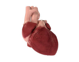 detailed 3d human heart 3d model max obj 3ds fbx