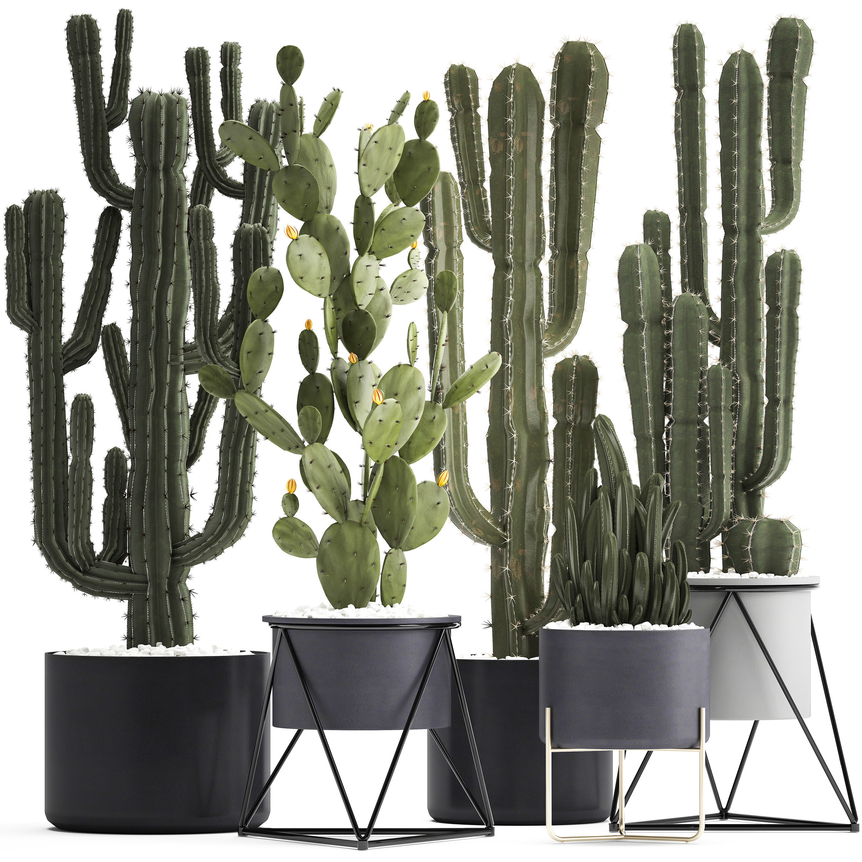 Collection of Exotic Cactus Plants