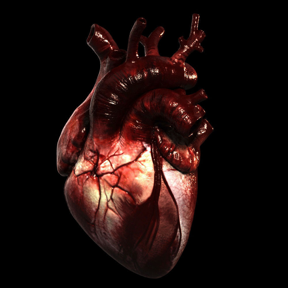 3D Heart Realistic Production | CGTrader