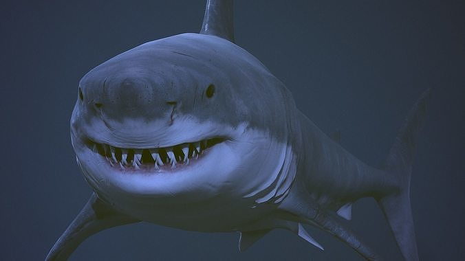 great white shark  aaa 3d model fbx tga 1