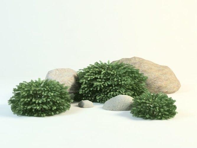 european spruce picea abies nidiformis 3d model max obj mtl 3ds fbx 1