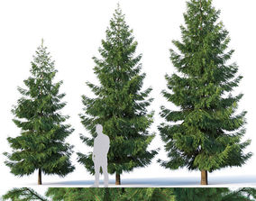3D model Spruce Nr 3 Three sizes H430-650cm - Modular