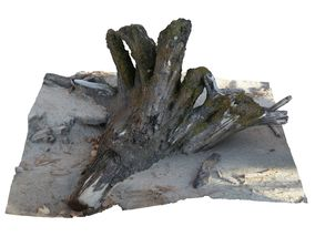 3D model Old Tree stump on the Beach scan 23