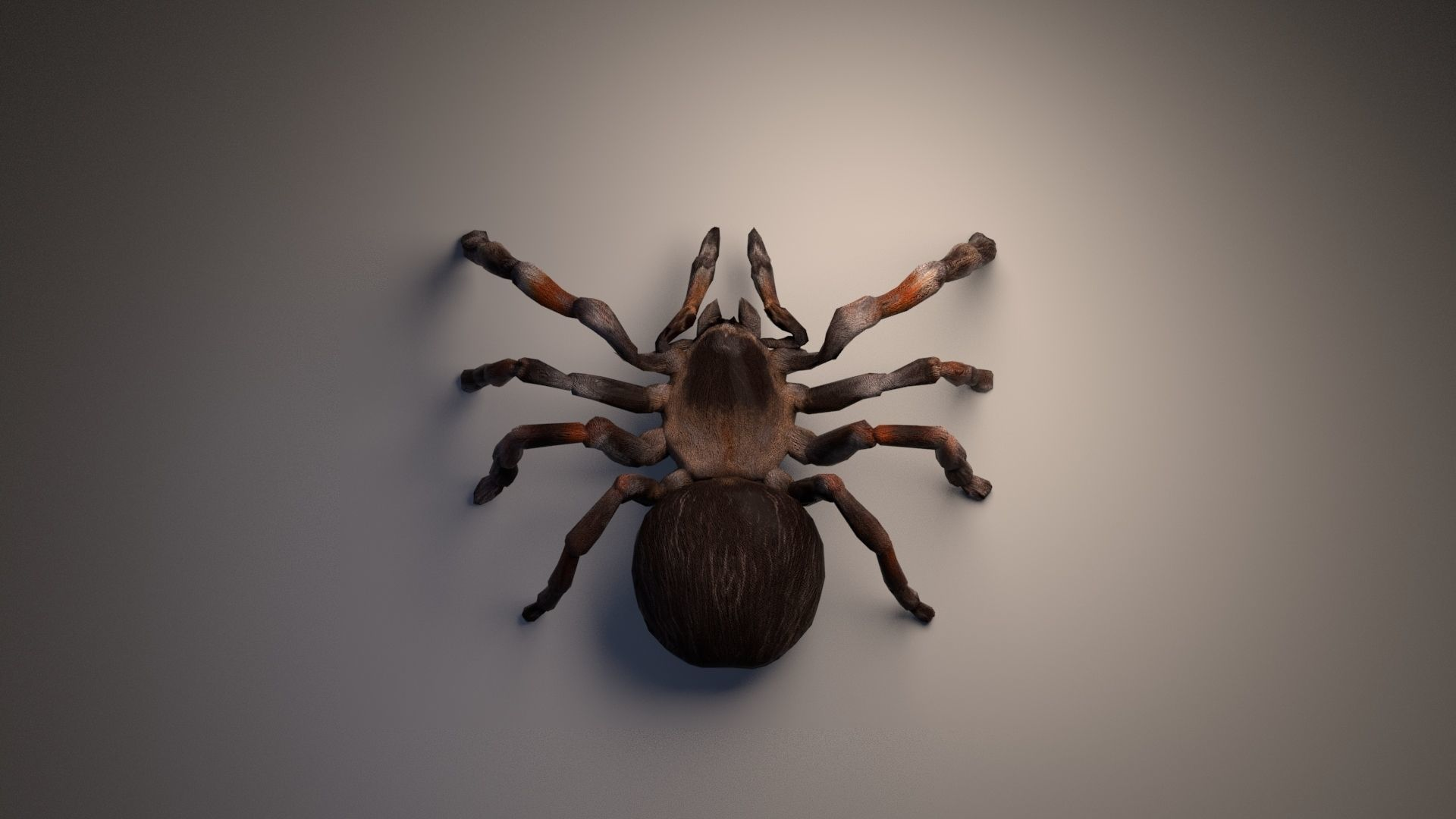 PBR Tarantula rigged and animated   3D model