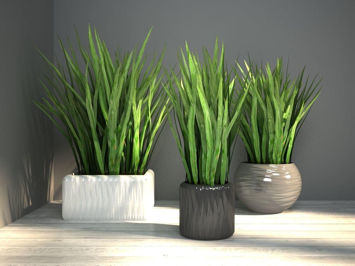 grass in pot