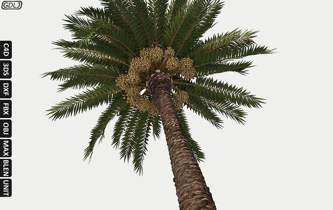 palm tree - closer to reality 3d model max obj mtl 3ds fbx c4d dxf 1