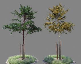 3D Young tree 01