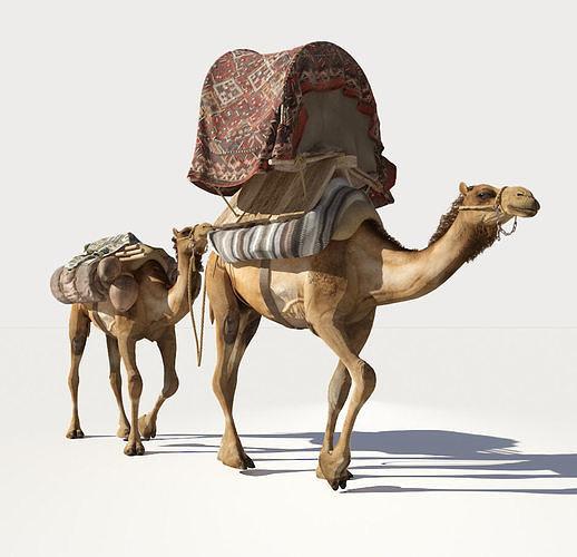 camel 3d model max obj mtl 1