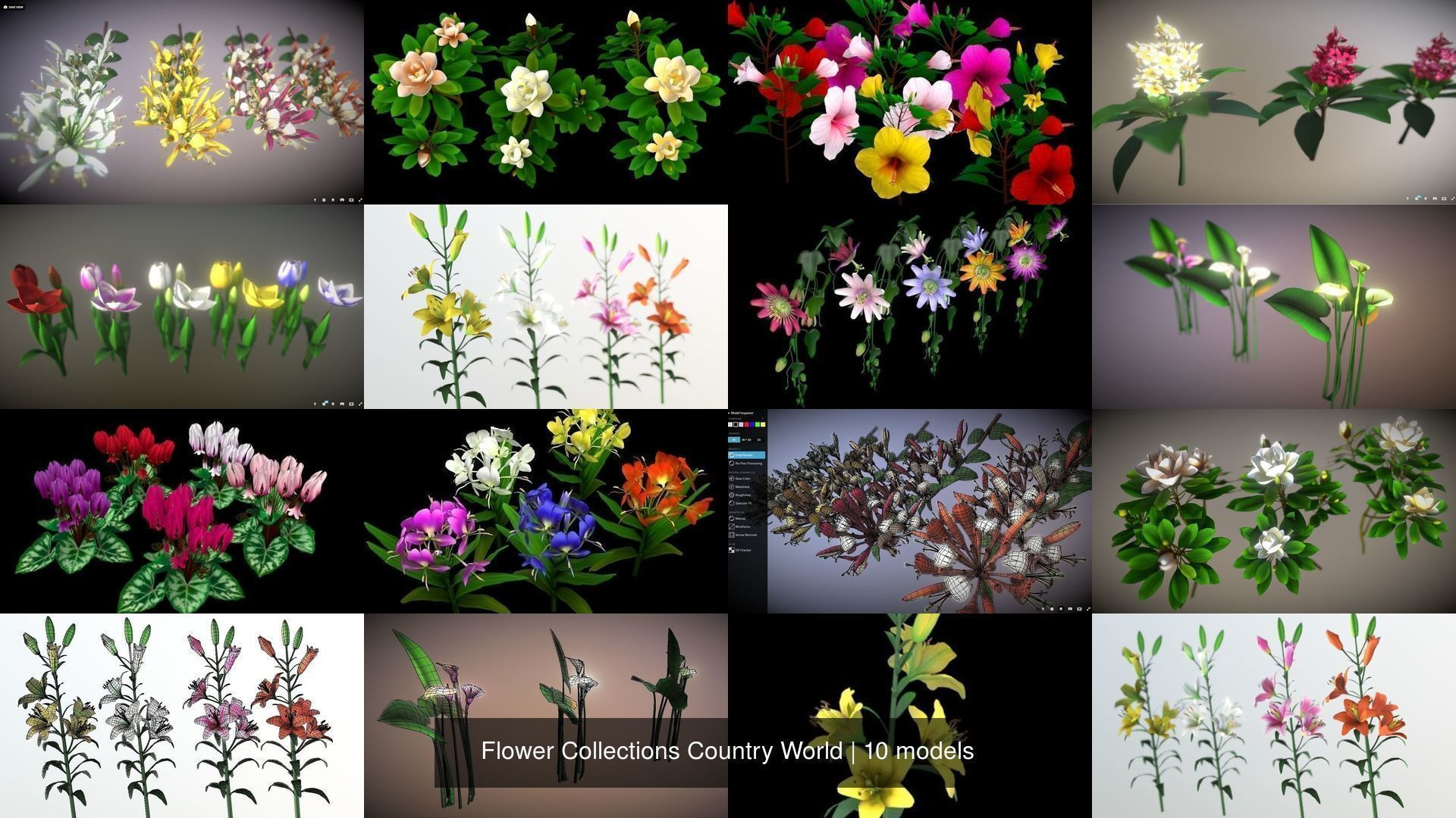 Flower Collections Country World