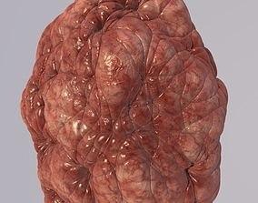 Bacillus Bacteria Virus 3D Model like Brain 2019