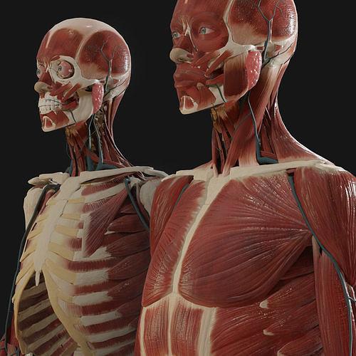 anatomy  2019 3d model fbx blend 1