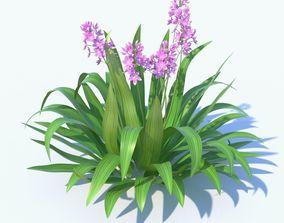 3D Spathoglottis tropical punch plant