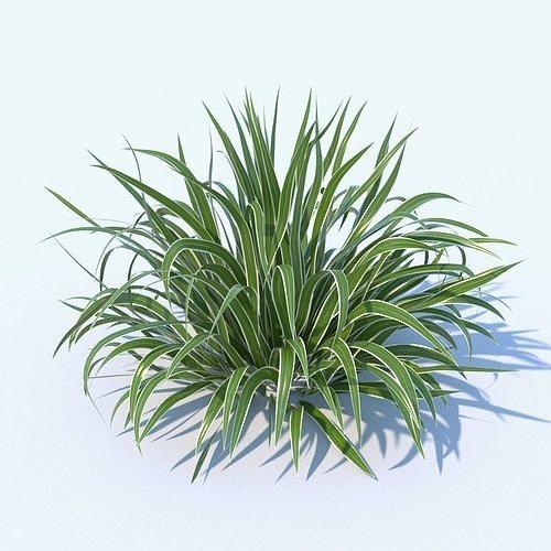 variegated dianella plant 3d model max obj mtl fbx 1