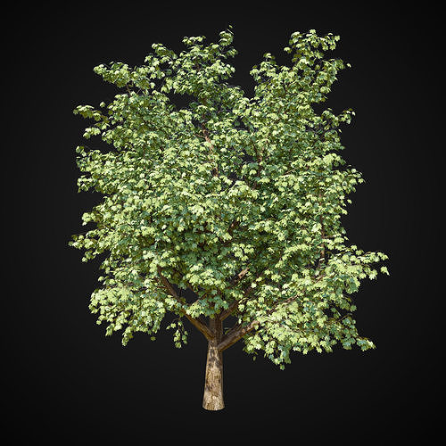 maple tree 2 3d model max obj mtl fbx 1