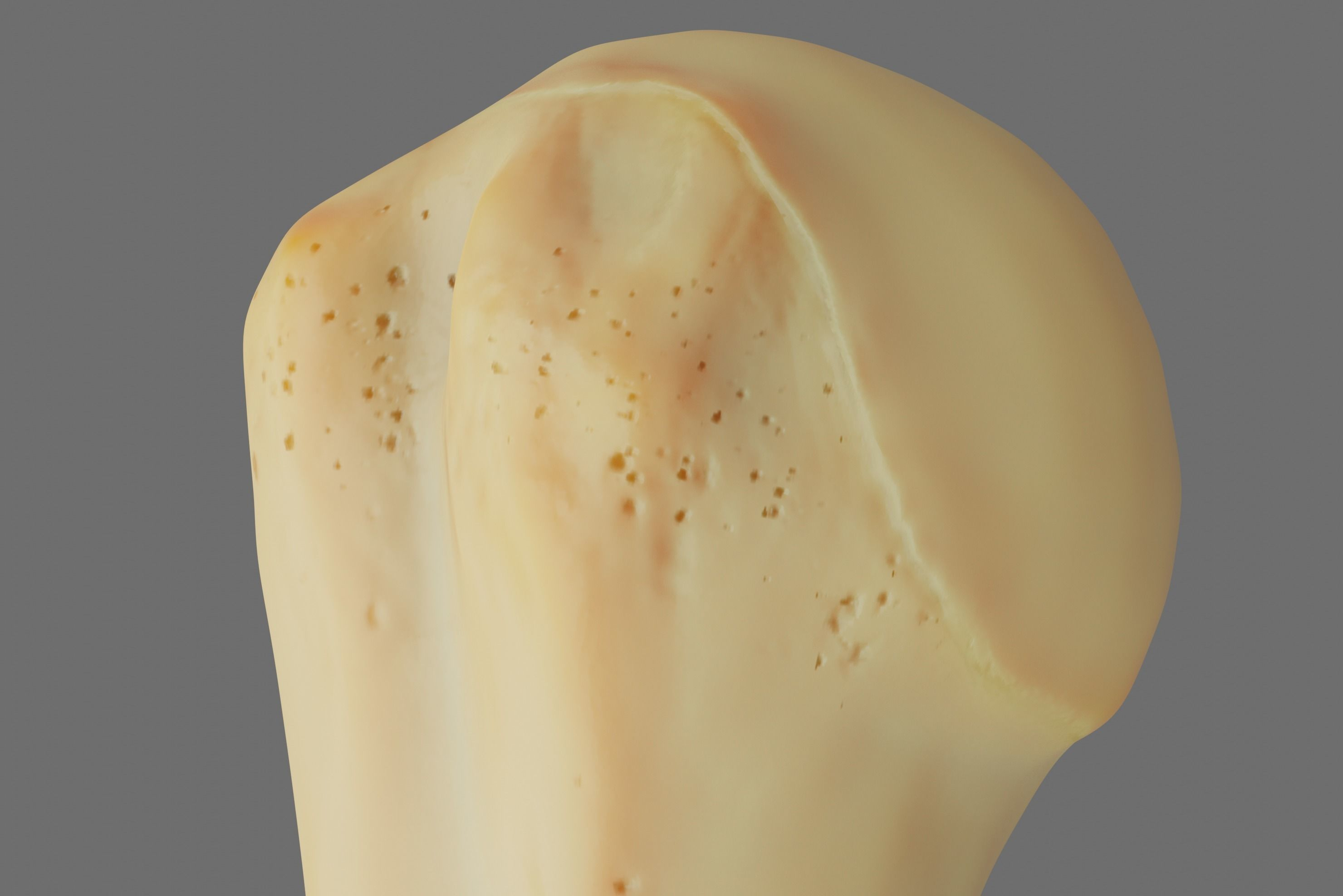 Humerus 3d Model - Anatomically Accurate