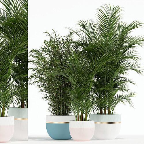plants collection 136 3d model max fbx 1