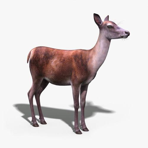 deer gray low poly - photo #32
