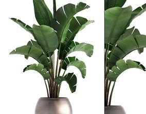 3D model Banana palm in a pot