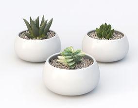 3D Small succulents